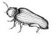 _beetle